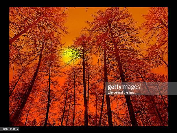 Acid Sunset