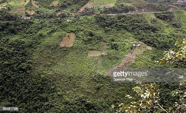 Acres of coca plants grow December 21 2005 in the town of Coroico in the Yungas Bolivia Evo Morales the newly elected Bolivian president and the...