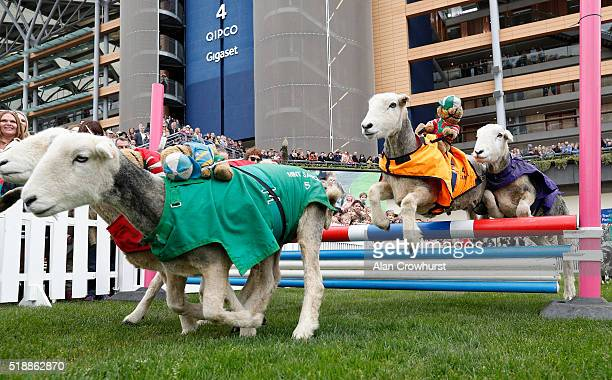 Action from the Lamb National at Ascot racecourse on April 03 2016 in Ascot England