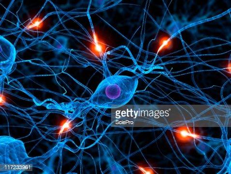 active neurone : Stock Photo