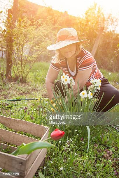 Aktive Senior Frau Gartenbau