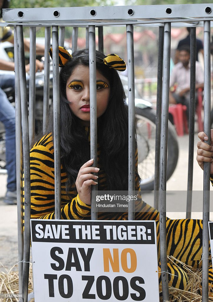 Activists from the People for the Ethical Treatment of Animals pose with body suits resembling tigers as they sit in a cage during a protest in front...