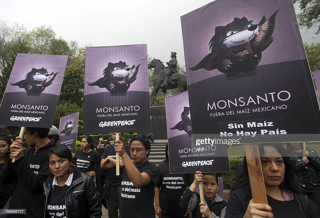 Activists of the global environmental watchdog Greenpeace demonstrate against US biotech giant Monsanto and the commercial sowing of transgenic corn, at 'Parque de los Venados' in Mexico City, on November 5, 2012. AFP PHOTO/ Pedro Pardo