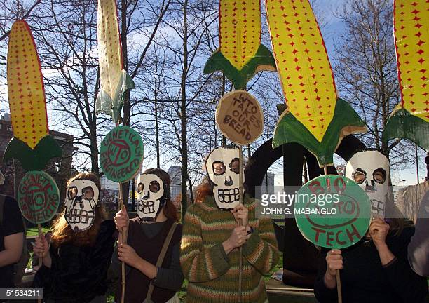 Activists of the Northwest Resistance Against Genetic Engineering hold up banners of genetically engineered corn during a rally 28 November 1999 in...