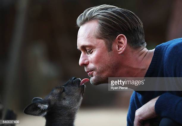 Actor Alexander Skarsgard kisses a baby Kangaroo during the Legend of Tarzan Photo Call at WILD LIFE Sydney Zoo on June 14 2016 in Sydney Australia