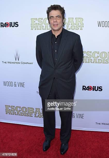 Benicio Del Toro Pictures and Photos   Getty Images