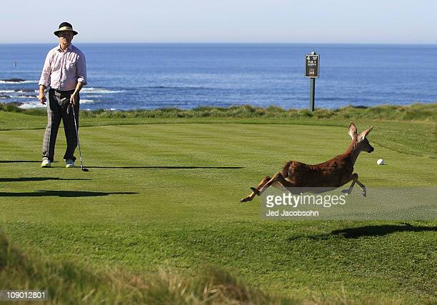 Actor Bill Murray watches a deer cross the tee box on the 3rd hole at the ATT Pebble Beach National ProAm Round Two at the Spyglass golf club on...