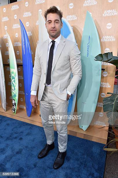 Actor Scott Speedman attends the TNT 'Animal Kingdom' S1 Premiere on June 8 2016 in Venice California 26227_001