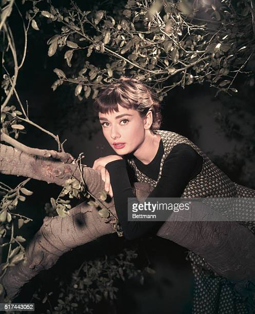 Actress Audrey Hepburn Leaning on Tree