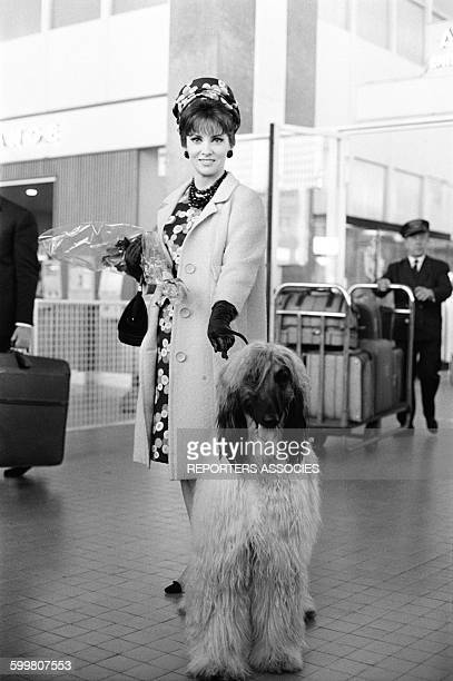 Actress Gina Lollobrigida Arrives At Nice Airport in Nice France on May 13 1965