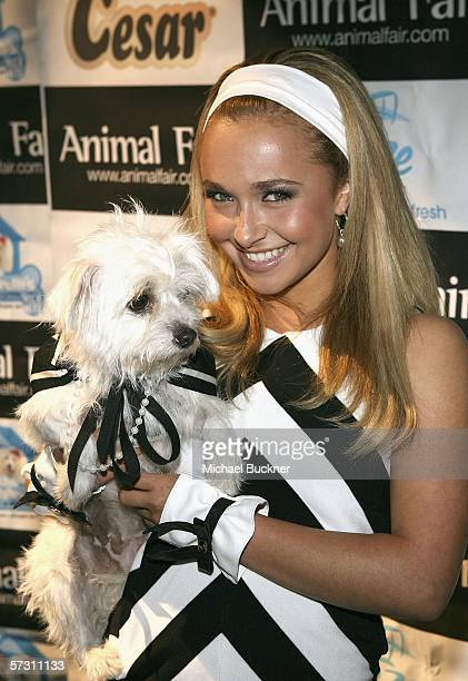 Actress Hayden Panettiere arrives at Animal Fair Magazine's 7th Annual 'Paws for Style' at Avalon on April 10 2006 in Los Angeles California
