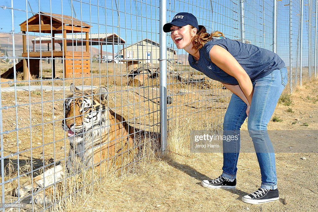 Minka Kelly Visits Rescued Lions, Tigers And Other Big Cats With the International Fund For Animal Welfare