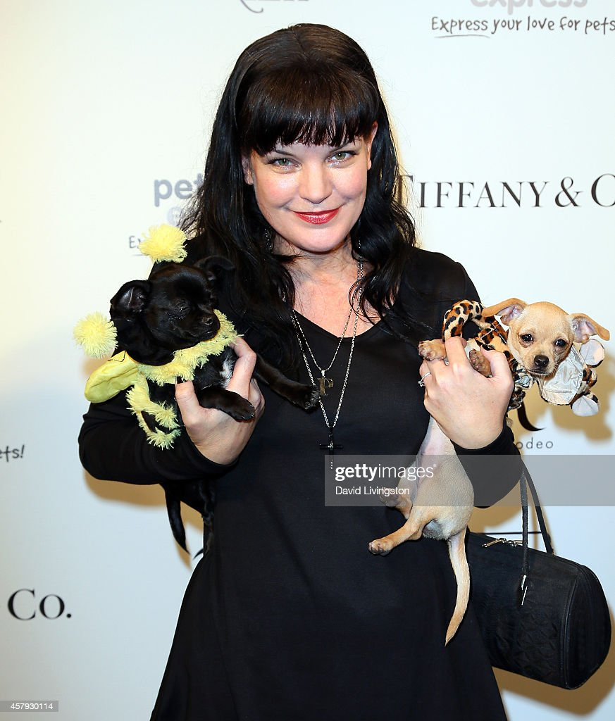 Actress <a gi-track='captionPersonalityLinkClicked' href=/galleries/search?phrase=Pauley+Perrette&family=editorial&specificpeople=625846 ng-click='$event.stopPropagation()'>Pauley Perrette</a> attends the Amanda Foundation's 2014 Bow Wow Beverly Hills Halloween Rodeo Drive 'Night of the Living Dog!' event at Via Rodeo at Two Rodeo Drive on October 26, 2014 in Beverly Hills, California.