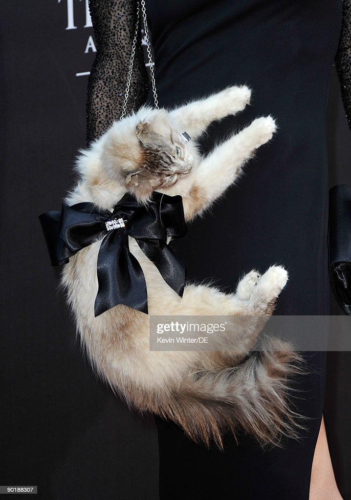 Actress Stacy Haiduk ('Mr. Kitty' stuffed cat prop detail) arrives at the 36th Annual Daytime Emmy Awards at The Orpheum Theatre on August 30, 2009 in Los Angeles, California.