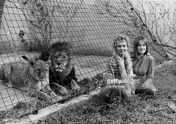 Actress Tippi Hedren and her actress daughter Melanie Griffith posing with the lions at London Zoo to promote the movie 'Roar' March 29th 1982