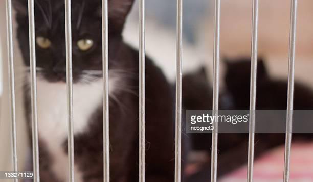 Véritable mère de chat et chatons dans l'Adoption Shelter