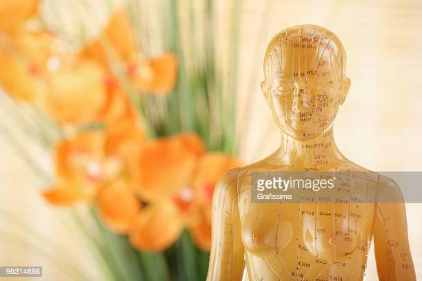 Acupuncture female model