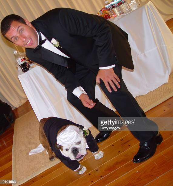 Adam Sandler poses with his pet bulldog Meatball at his wedding June 22 2003 in Malibu California Sandler married modelactress Jackit Titone