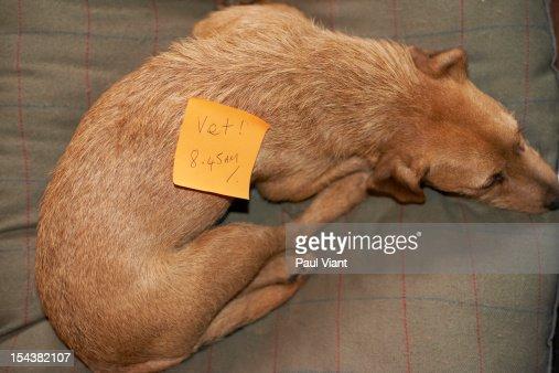 adhesive note on pet dog : Stock Photo