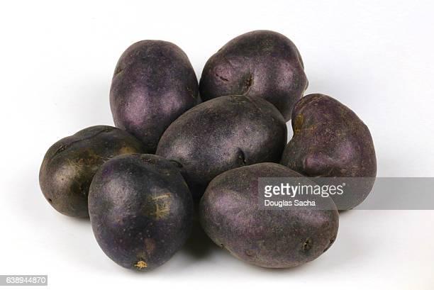 Adirondack Blue Potatoes (Solanum tuberosum)