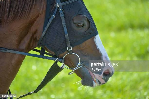 Admire Deus at Werribee Racecourse on October 03 2017 in Werribee Australia