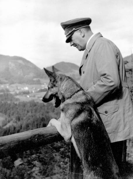 Eva Braun S Dog