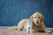 A cat and golden retriever are sitting together in their home.