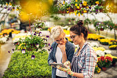 Adorable charming professional modern florist woman showing a list of flowers on a tablet to the curious attractive blonde female customer in a greenhouse.