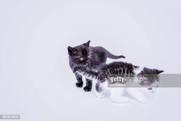Adorable kittens isolated on white background