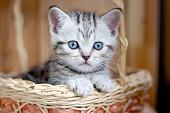 Adorable little kitten sitting in a wicker basket