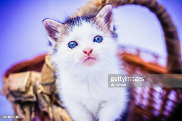 Adorable small kitten in wooden basket