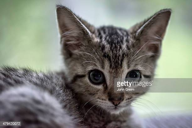 Adorable tabby kitten portrait