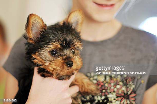 Adorable Yorkshire Terrier Puppy Held by Girl