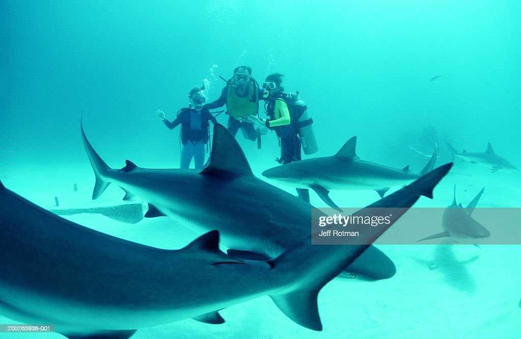 Adult and boy divers on sea floor with Caribbean reef sharks : Stock Photo