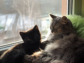 Adult cat and kitten on the window sill. The rays of the spring sun