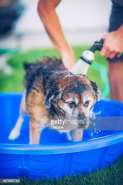Adult Dog Getting Bath Outdoors