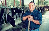 Adult pleasant cheerful  farmer is standing near cows at the farm.
