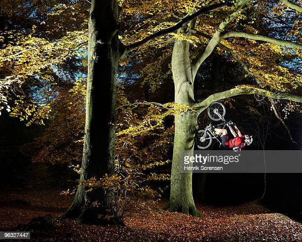 Adult mountain biker cycling up a tree
