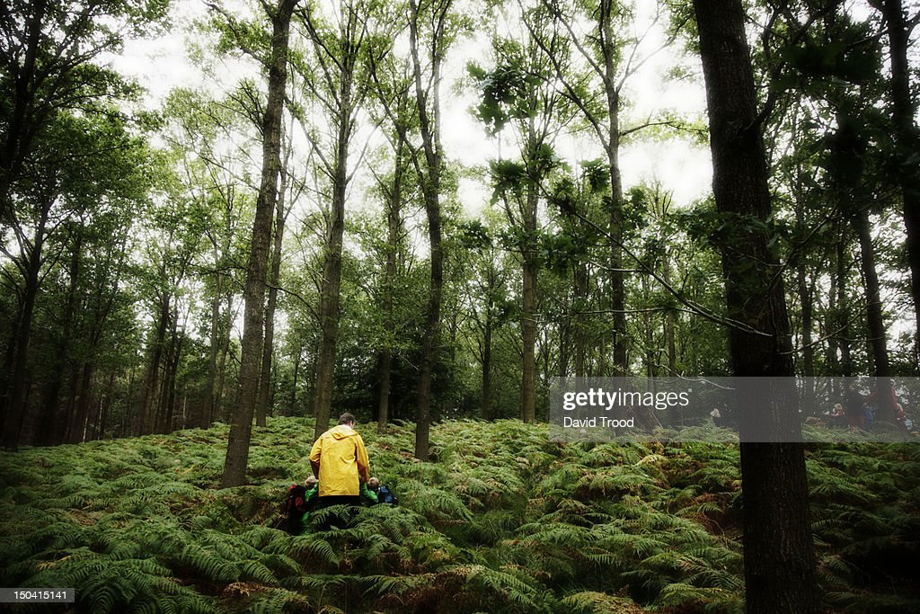 Adult walking with children in the forest. : Stock Photo