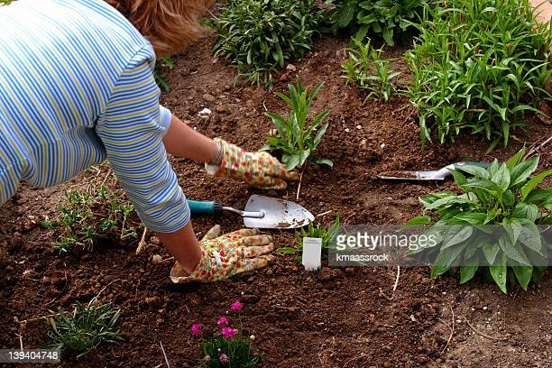Adult woman doing gardening work