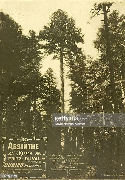 Advertisement for Absinthe Duval showing the tallest pine tree in France situated in the Joux forest just outside Pontarlier The connection to...