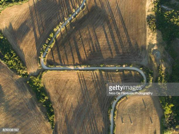 Aerial drone view of cypress tree lined road