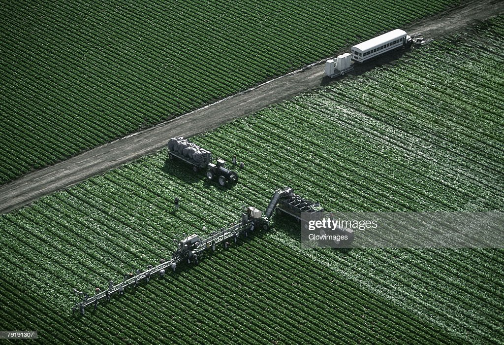 Aerial, harvesting head lettuce : Stock Photo