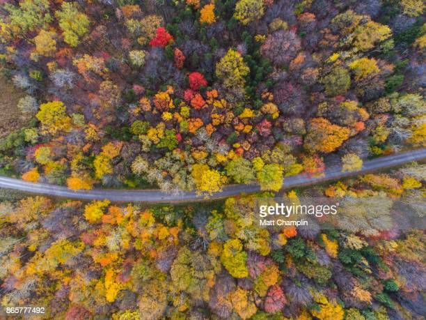Aerial Looking down on Dirt Road through Autumn Woodland