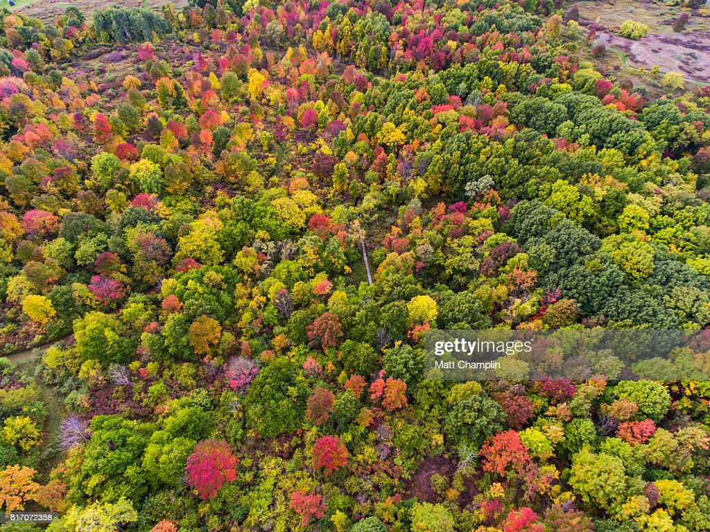 Aerial of colorful Autumn forest turning : Stock Photo