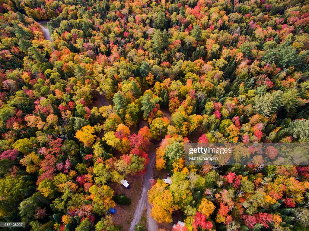 Aerial of colorful Autumn trees