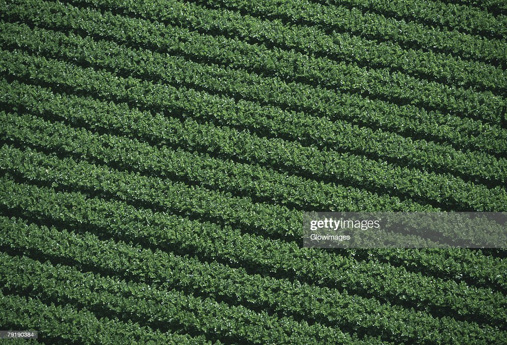 Aerial of farm fields : Foto de stock