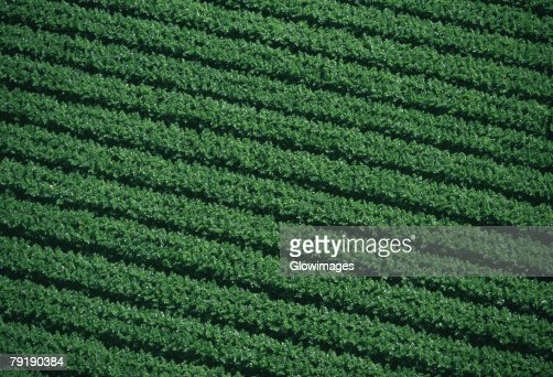 Aerial of farm fields : Foto de stock