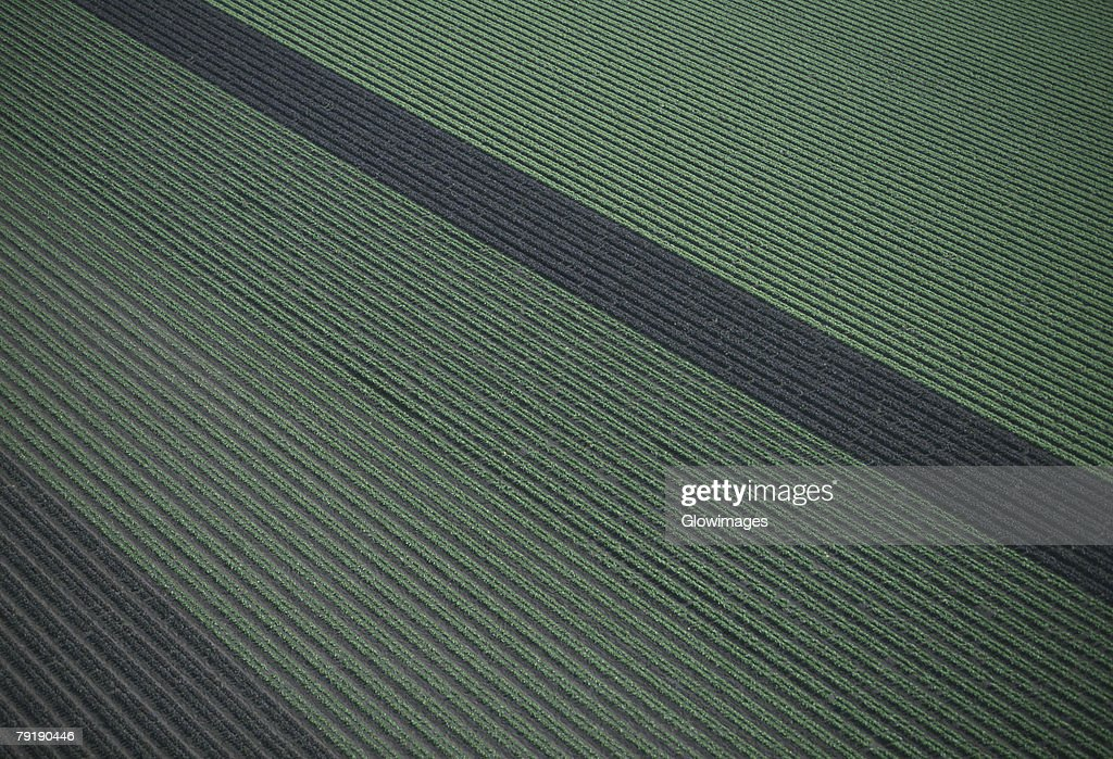 Aerial of red and green leaf lettuce field : Foto de stock