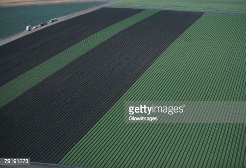 Aerial of red and green leaf lettuce field : Stock Photo